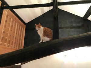 今井町の家猫1